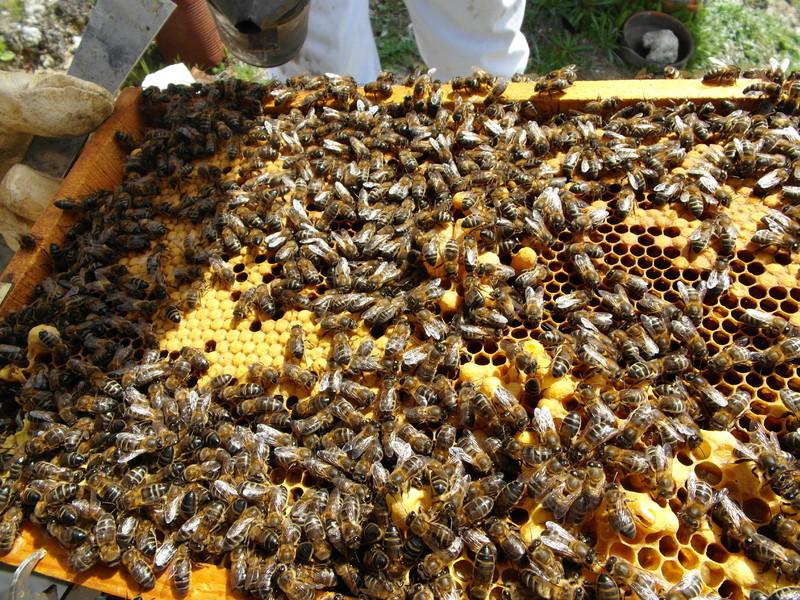 La miel de Mario: venta de enjambres y abejas reina